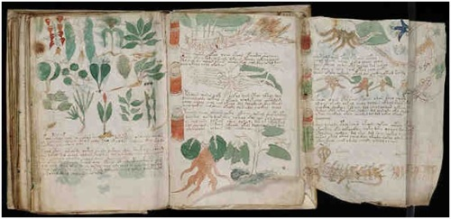 manuscrit-voynich3